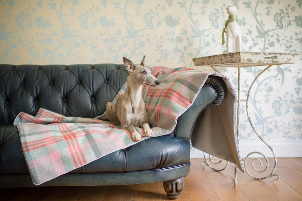 dog car blanket
