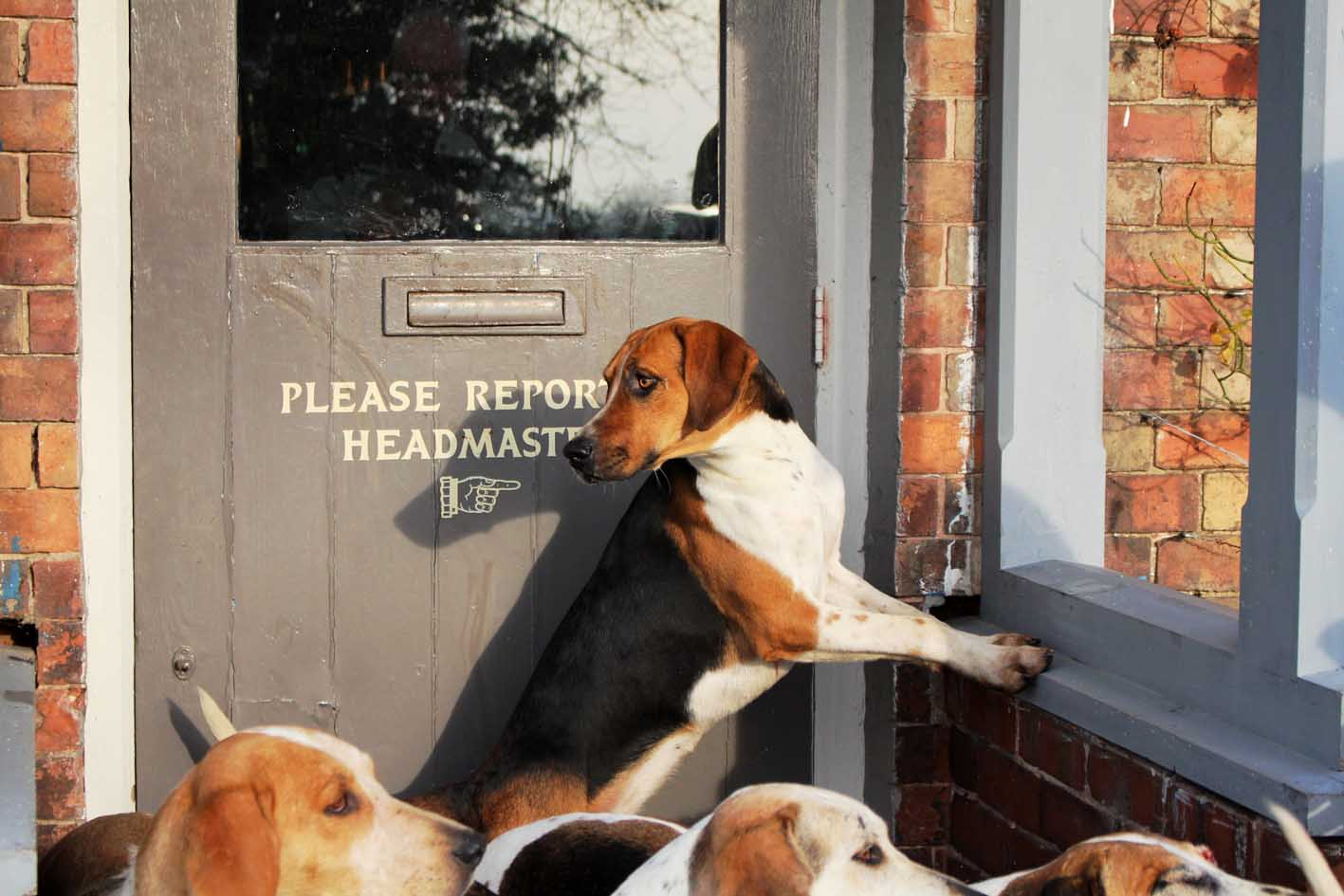 Dog Friendly Restaurants Cheshire
