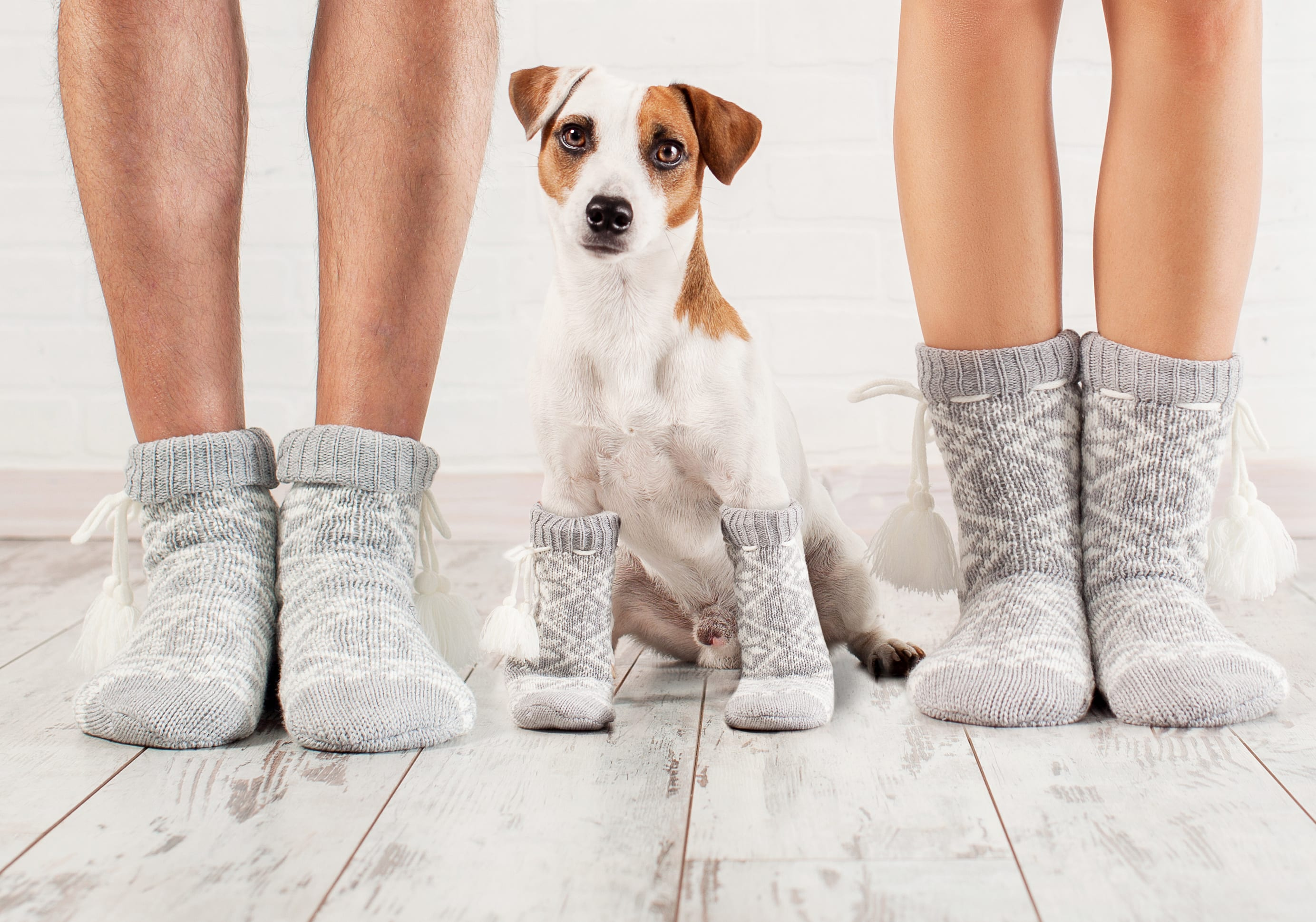 The Lounging Hound S Top Tips For Dog Proofing Your Home