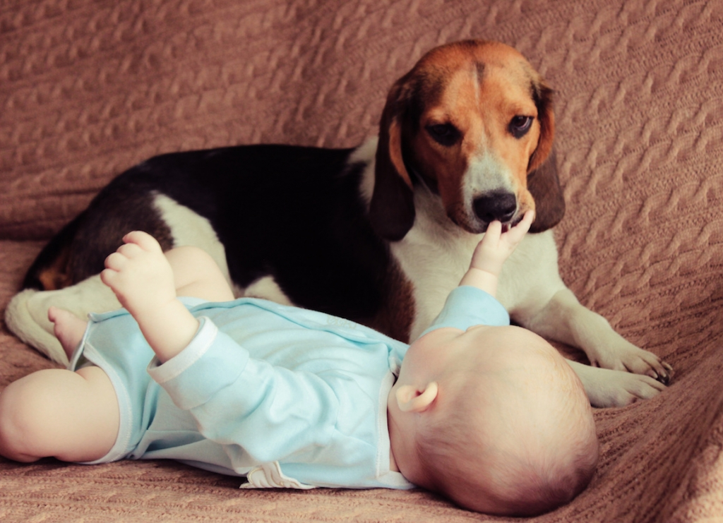 Newborn baby and estonian hound lying on sofa looking at each other
