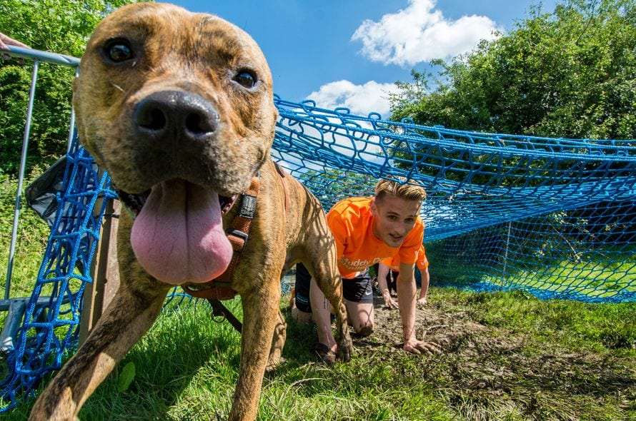 Battersea Dogs And Cats Home S Muddy Dog Challenge