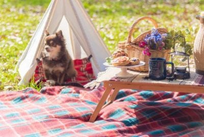 dog-picnic-menu