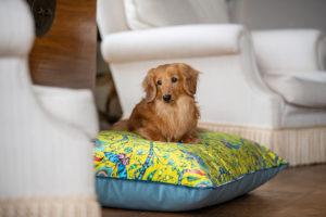 Rousseau Velvet Pillow Bed