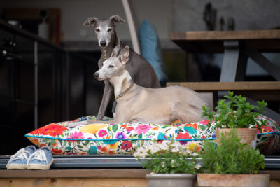 Arianne-Garden-Dog-Bed-9